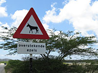 Crossing Donkeys